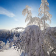 Stock Photo: Lapland Finland