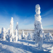 Lapland Finland — Stock Photo #21567163