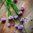 Chives — Stock Photo #27602947
