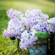 Lilac — Stock Photo #27603045