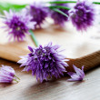 Bunch of fresh flower chives — Stock Photo
