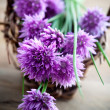 Bunch of fresh flower chives — Stock Photo #27603113