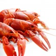 crawfish — Stock Photo #31244725
