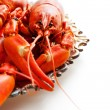 Crawfish — Stock Photo #31244763