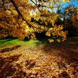 Colorful autumn trees on beautuful sunny day — Stock Photo