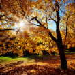 Stock Photo: Colorful autumn trees on beautuful sunny day