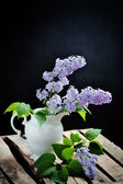 Close up of lilac — Stock Photo