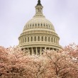 The Capitol in Spring - Stock Photo