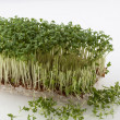 Partly cut cress — Stock Photo