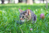 Little Cat in the green grass — Stock Photo