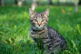 Little kitten on the grass close up — Stock Photo