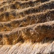 Thatched roof close up - Foto de Stock