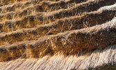 Thatched roof close up — Stock Photo