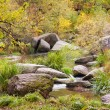 Autumn forest with the river — Stock Photo #26864693