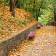 Benches in the autumn park — Stockfoto