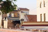 Hund på taket — Stockfoto