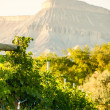 Vineyard — Stock Photo #13254321