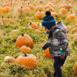Stock Photo: Pumpkin patch