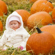 Pumpkin patch - Foto de Stock