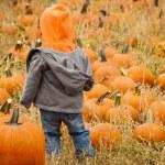 Pumpkin patch — Stock Photo #13559799