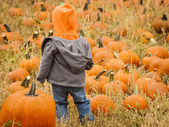 Pumpkin patch — Stock Photo