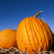Royalty-Free Stock Photo: Pumpkin Patch