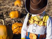 Pumpkin Partch — Stock Photo