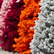 Stock Photo: Flocked Christmas Tree