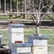 Beekeeping — Stock Photo