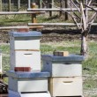 Stock Photo: Beekeeping