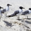 Seagulls — Stock Photo #24839969