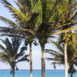 Beach of CaribbeSea — Stock Photo #24844439
