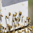 Beekeeping — Stock Photo #25331145