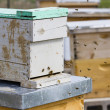 Beekeeping — Stock Photo #25414877