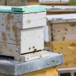 Beekeeping — Stock Photo #25419471