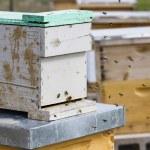 Beekeeping — Stock Photo #25419471
