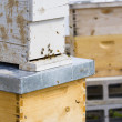 Beekeeping — Stock Photo #25419507