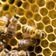 Beekeeping - Photo