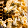Beekeeping - Stock Photo