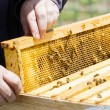Beekeeping — Stock Photo #25420743