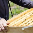 Beekeeping — Photo
