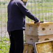 beekeeper — Stock Photo #25420993