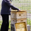 Beekeeper — Stock Photo #25420997