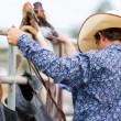 Rodeo — Stock Photo #28240487