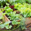 Stock Photo: Community garden