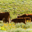 Cattle — Stock Photo #28835905