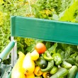 Vegetable garden — Stock Photo #29666323