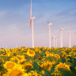 Wind turbines and sunflowers — Stock Photo #30171457