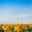 Wind turbines and sunflowers — Stock Photo #30171461