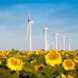 Wind turbines and sunflowers — ストック写真